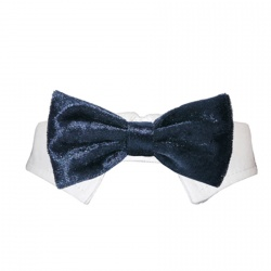 Papillon con colletto VELLUTO (blu)