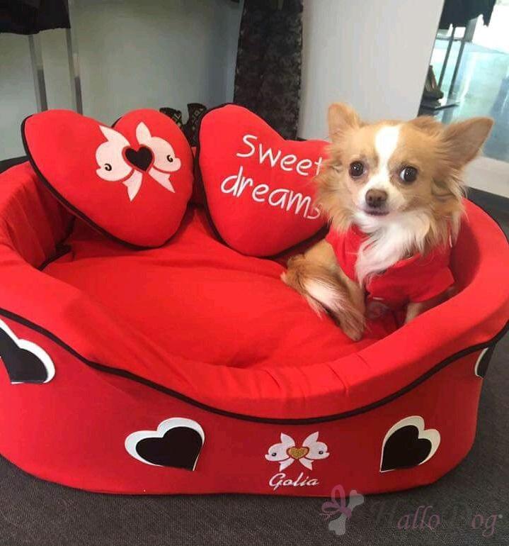71dd61a6c2cf Abbigliamento per cani contrassegno – Giacche eleganti 2018-2019