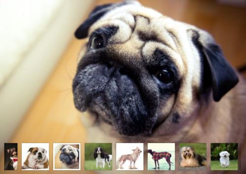 Le migliori razze di cani da appartamento secondo l american