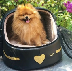 (NEW 2019) Trasportino Auto POCKET HEART CAR IGLOO (Nero con glitter oro)
