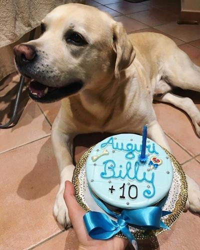 Torte di compleanno per Cani