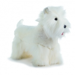 West Highland Terrier (versione C)